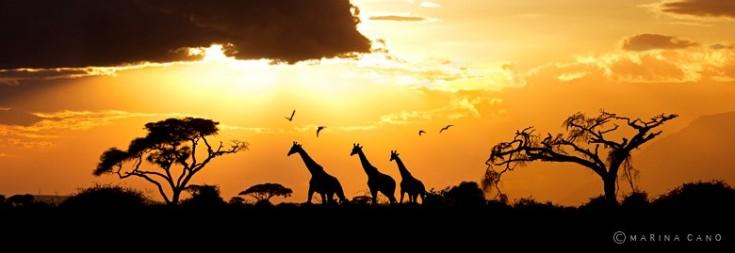 Amboseli, Kenya. Foto: Marina Cano