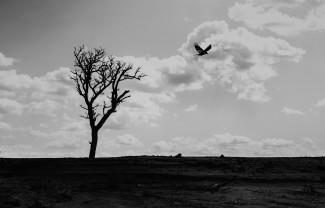 © Eric Gyamfi